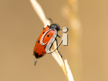Red beetle on nature. close