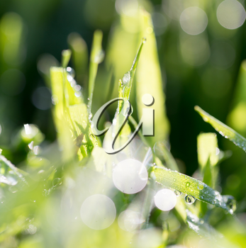 drops of dew on the grass in nature
