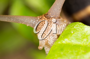 detail of a snail in nature. super macro