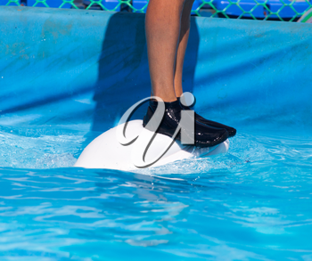 man standing on a white dolphin in the pool