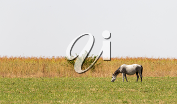 a horse in a pasture in nature
