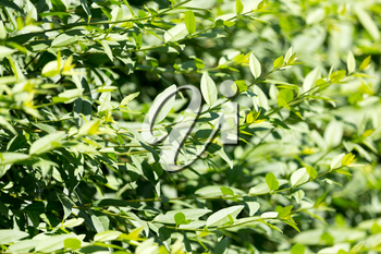 green leaves on the plant in nature