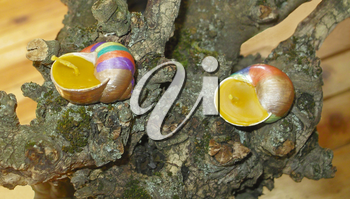 Hand painted beeswax candles votives in snail shell