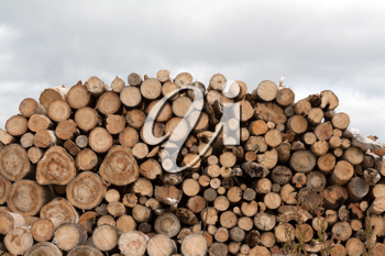 Royalty Free Photo of a Pile of Firewood