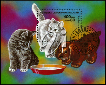 MALAGASY REPUBLIC - CIRCA 1985: A Stamp sheet printed in MALAGASY REPUBLIC shows image of a Kittens and Pup from the series Cats and Dogs, circa 1985