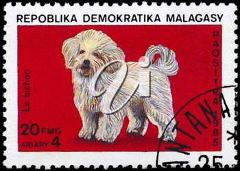 MALAGASY REPUBLIC - CIRCA 1985: A Stamp printed in MALAGASY shows image of a Bichon from the series Cats and Dogs, circa 1985