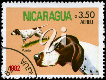 NICARAGUA - CIRCA 1982: A Stamp printed in NICARAGUA shows image of a Pointer from the series Dogs, circa 1982