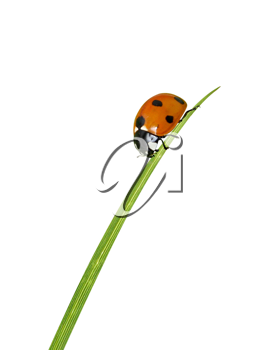 Royalty Free Photo of a Ladybug on a Blade of Grass