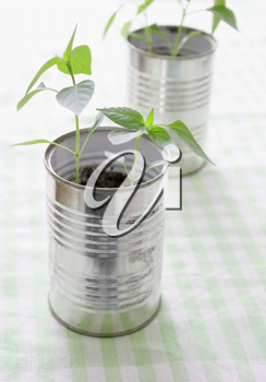 Royalty Free Photo of a Plant in a Can