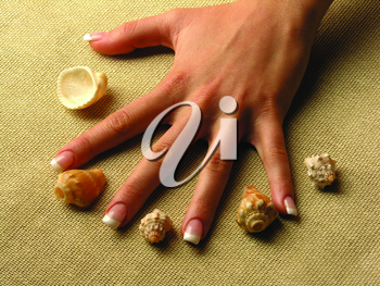Royalty Free Photo of Hands and Seashells