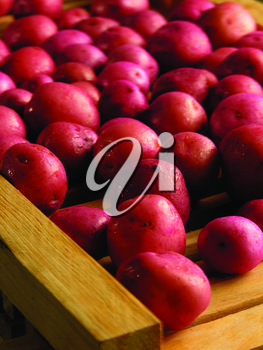 Royalty Free Photo of Red Potatoes