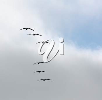 Royalty Free Photo of Seagulls Flying