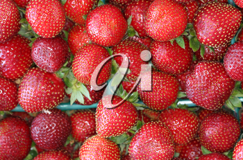 Royalty Free Photo of Strawberries