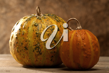 Royalty Free Photo of Gourds