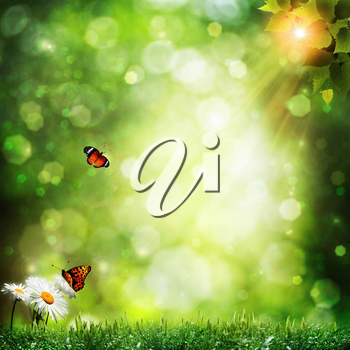 Abstract summer backgrounds with daisy flowers and butterfly