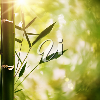 Royalty Free Photo of Bamboo and a Bokeh Background