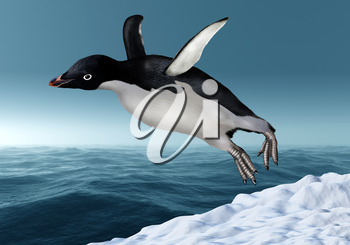 Adelie Penguin leaping from the snow towards an icy ocean