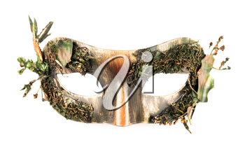 Carnival mask with dry moss isolated on a white background.