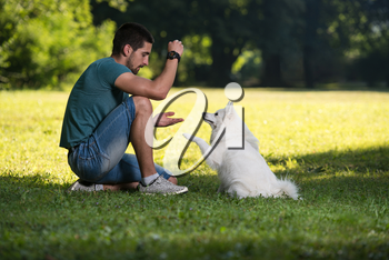 Young Man Sitting With Dog German Spitz In Park - He Cleans Him