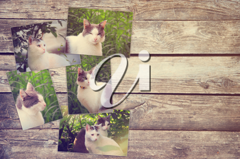collage of photos of cat