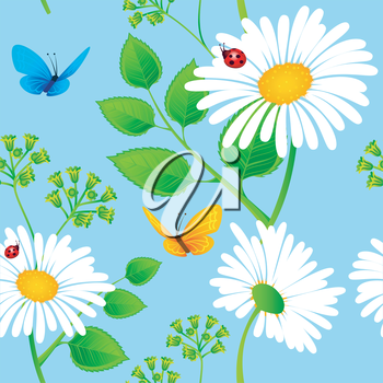 Vector illustration of Chamomile background