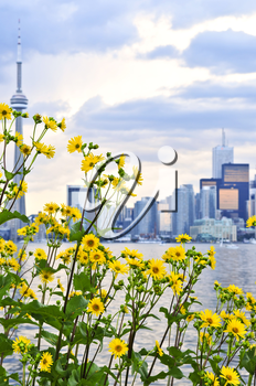 Toronto city waterfront skyline with yellow flowers in foreground