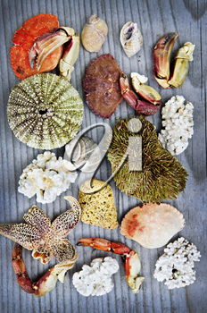 Background with different types of marine life from Atlantic ocean in Newfoundland, Canada