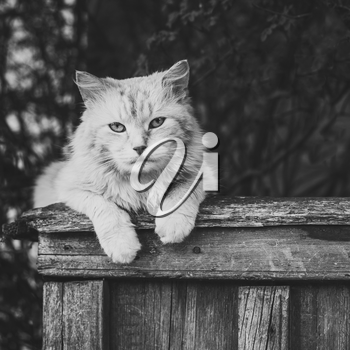 Cat Sitting On A Fence And Looking At Camera. Black and white colors