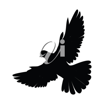 Pigeon vector. Religion, wedding, peace, pacifism, concept in black color. Illustration for religion attributes, childrens books illustrating. White pigeon flying wings spread isolated on white.