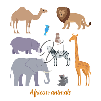 Collection of african animals. Flat design vector. Camel, lion, parrot, monkey, hippo, zebra, elephant, giraffe koala illustrations For nature concepts books illustrating printing materials