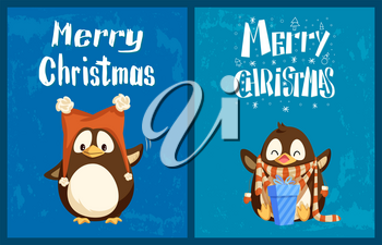 Merry Christmas greeting cards, penguins in hat with bubos and scarf with mittens. Gift box or present, bird in winter clothes, holiday celebration vector