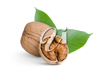 walnut with green leaves isolated on white
