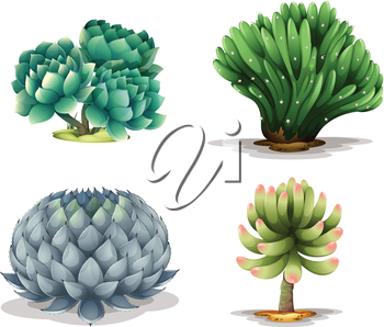 Illustration of the different cacti on a white background