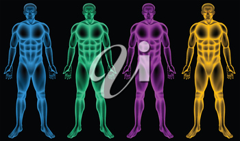 Illustration of the coloured male bodies