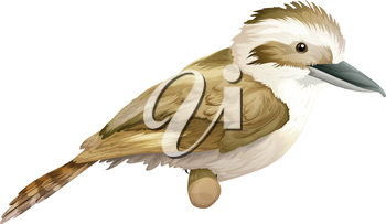 Illustration of a kookaburra