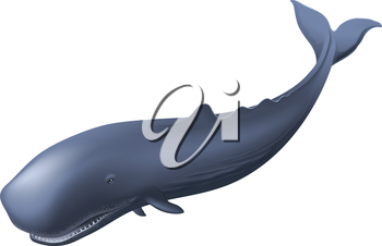 Illustration of a sperm whale