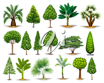Different types of green trees illustration