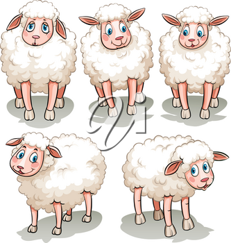 Five white sheeps on a white background