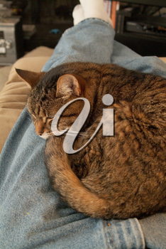 Stock Image of a Cat Lying On a Person's Lap