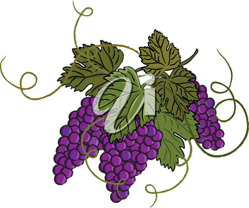 Clip Art Illustration of Purple Grapes With Leaves