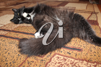 black tired cat sleeping on the brown carpet