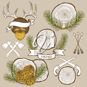 Pine branches and cones with tree rings in hipster style, vector antlers, arrows and ribbons