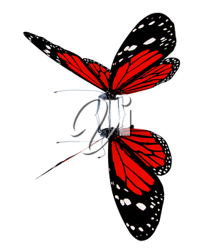 Butterfly on a white background