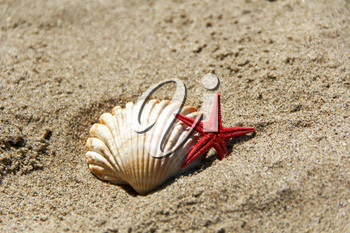Photo of shell and starfish on the sand