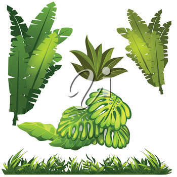 Royalty Free Clipart Image of Ferns