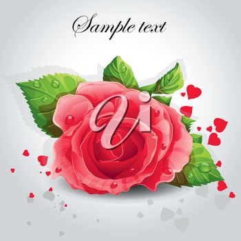 Royalty Free Clipart Image of a Red Rose on a Grey Background