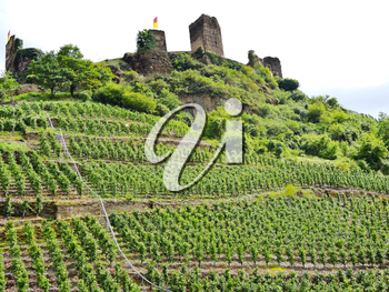 vineyards under Metternich Castle in Moselle region, Germany
