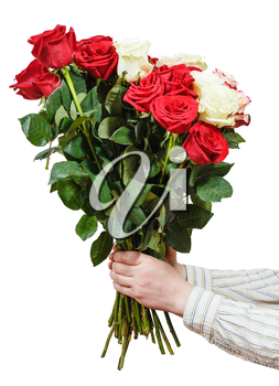 two hands giving bouquet of various roses isolated on white background