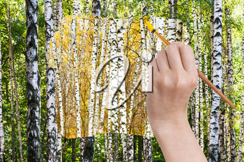 nature concept - seasons and weather changing: hand with paintbrush paints yellow autumn birch grove in green summer birch forest