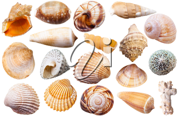 set of different mollusk shells isolated on white background